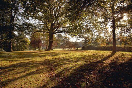Autumn at Hever in the Anne Boleyn Garden