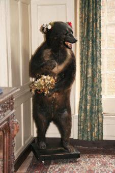 Clifton House taxidermy stuffed bear