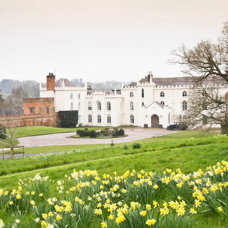 Combermere Abbey spring daffodils