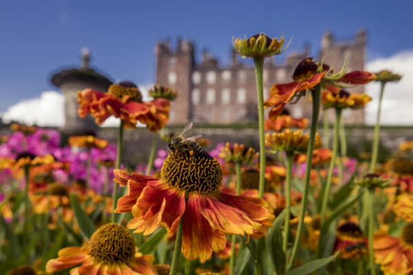 Drumlanrig Castle flowers and bees