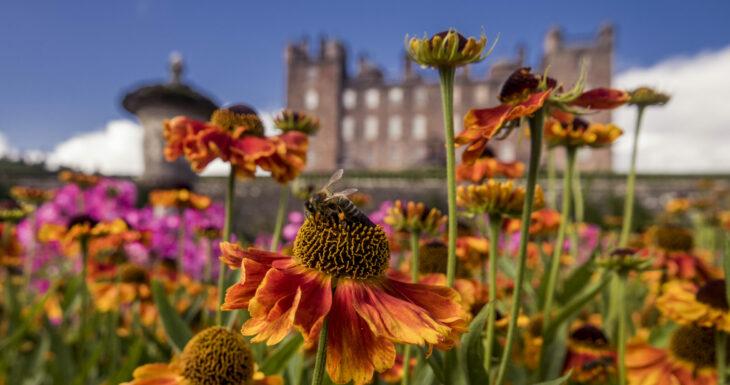 Drumlanrig Castle flowers and bees
