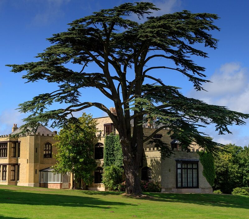 Farringford on the Isle of Wight with a large tree