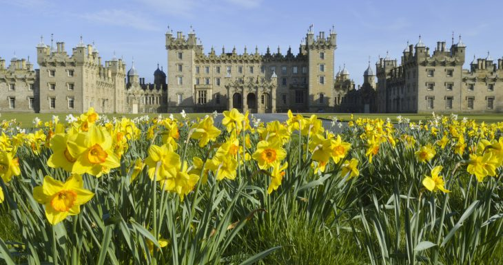 Floors Castle spring daffodils