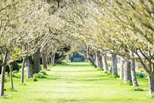 Helmingham Hall Apple Tree Walk
