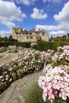 Hever Castle's beautiful rhododendruns
