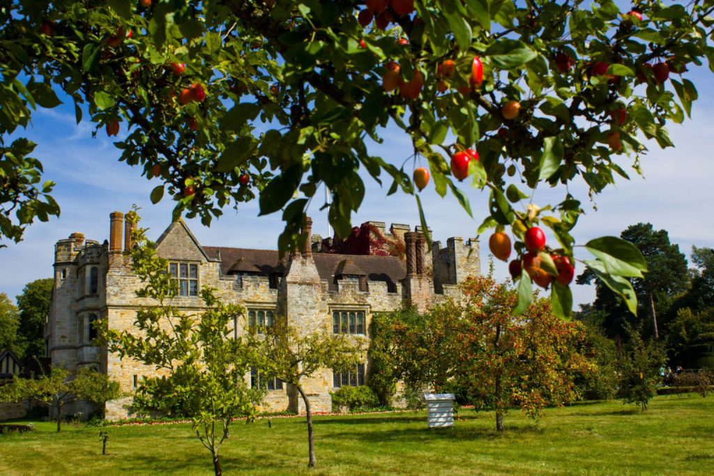 Hever Castle Orchard and Apple Tree