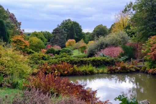 High Beeches Garden in Haywards Heath