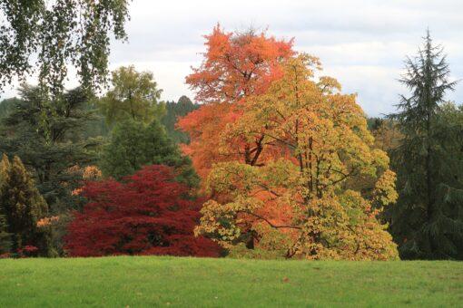 High Beeches Garden is an historic garden in Haywards Heath