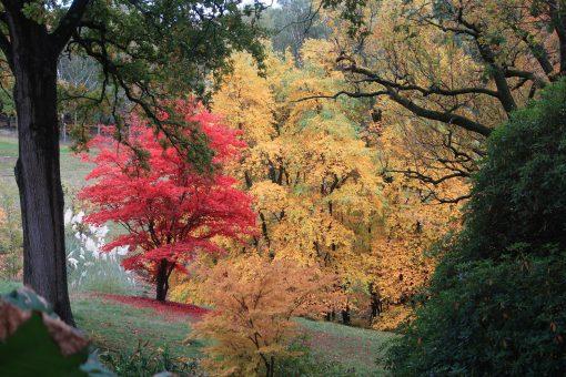 High Beeches Garden in the autumn