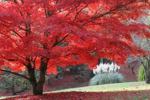 High Beeches Garden with stunning blazes of red