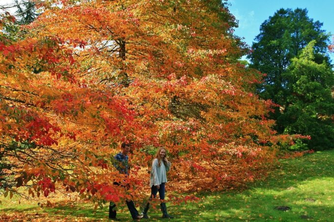 High Beeches Garden is the perfect place for a walk