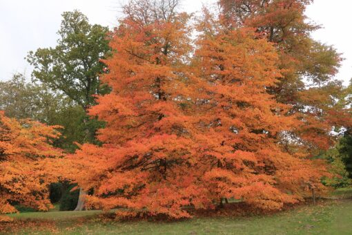 High Beeches Garden looks its finest in autumn