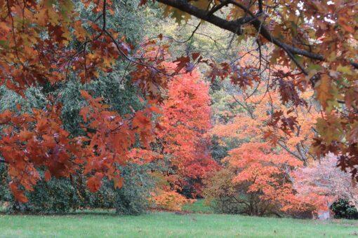 High Beeches Garden is the perfect English garden