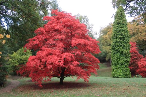High Beeches Garden is a study in colour