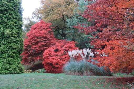 Visit High Beeches Garden in Haywards Heath
