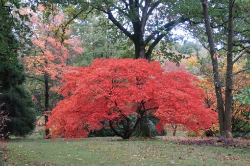 High Beeches Garden retains incredible varieties of trees