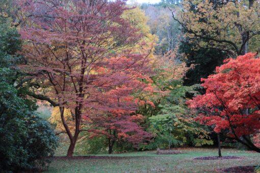 High Beeches Garden is a glorious outdoor historic garden