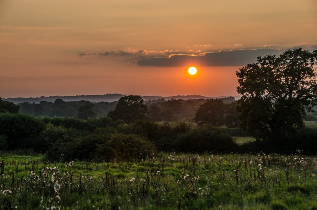 Knepp Estate biodiversity and sunset
