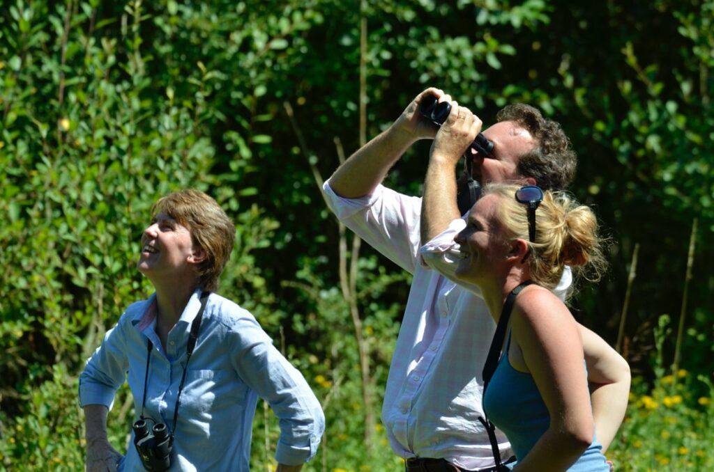 Knepp Estate bird-watching Safari