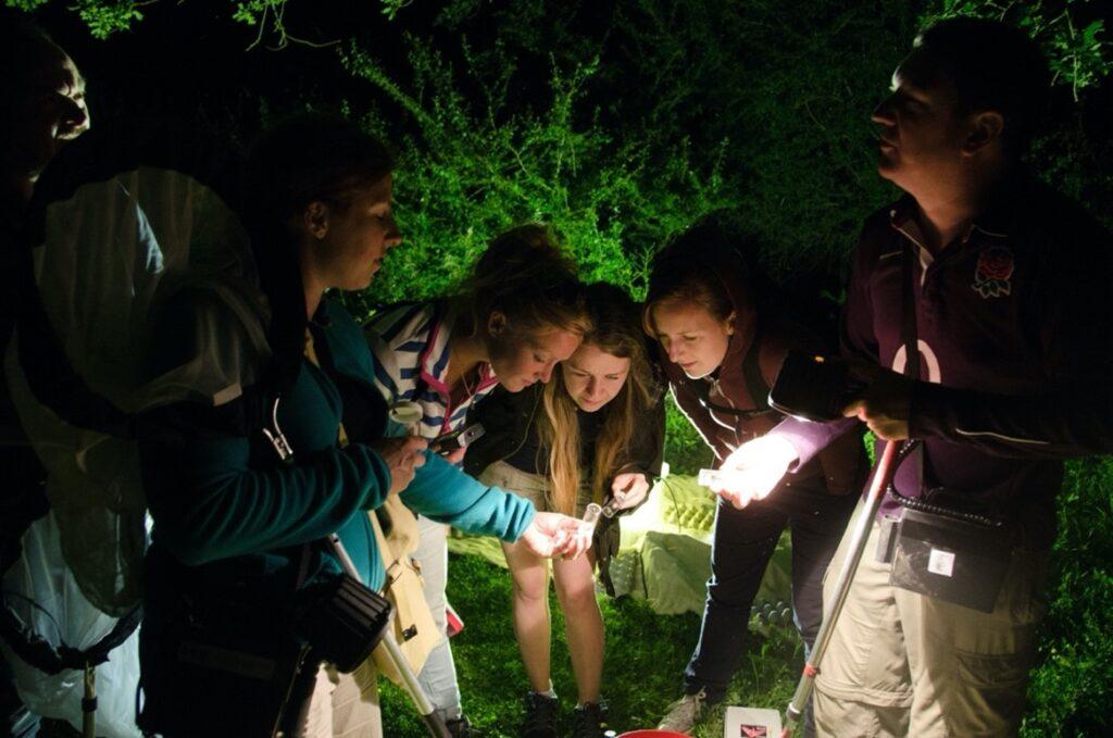 Knepp Estate moth survey with Knepp Safaris