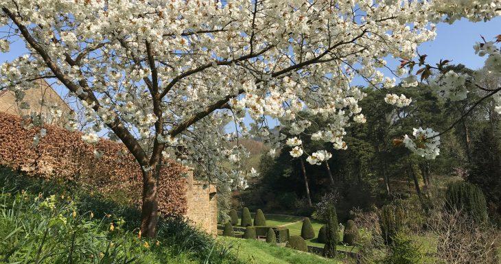 Mapperton Gardens with blossom