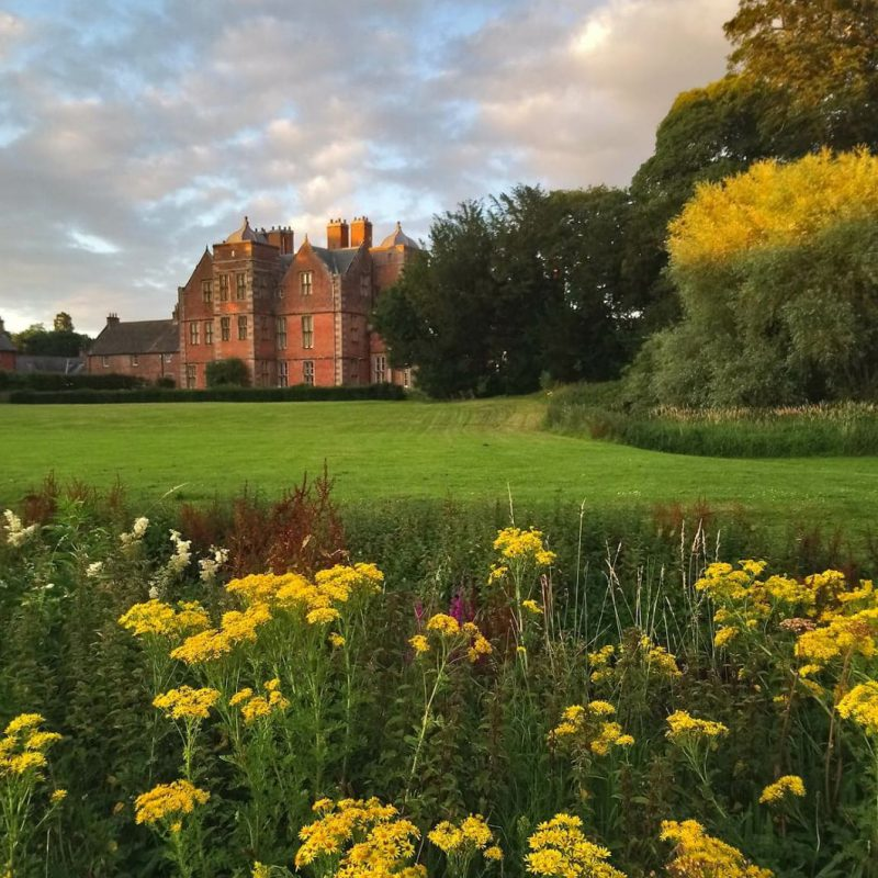 Ragwort at Kiplin Hall and Gardens, pictured in the evening light before being carefully pulled as part of eco managment RS