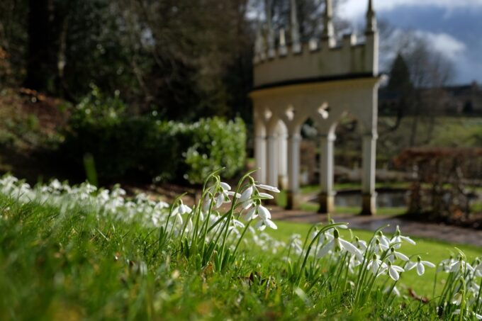 Snowdrops with Exedra background at Painswick Rococo Garden