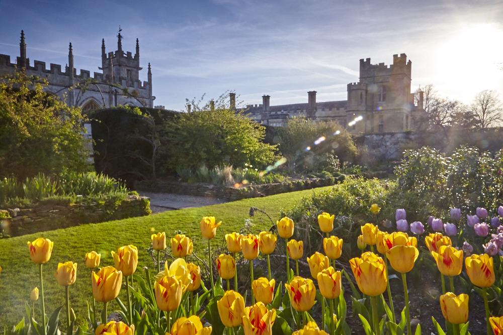 Sudeley Castle tulips