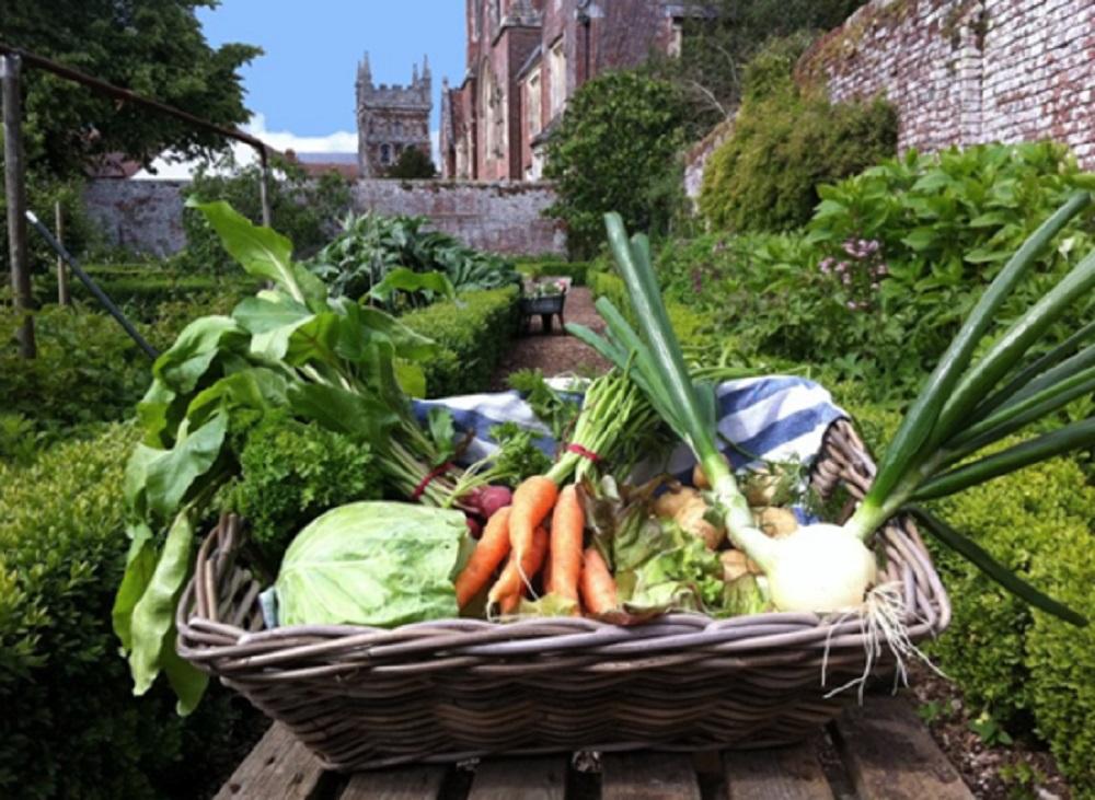 A kitchen garden veg box, ready to go Deans