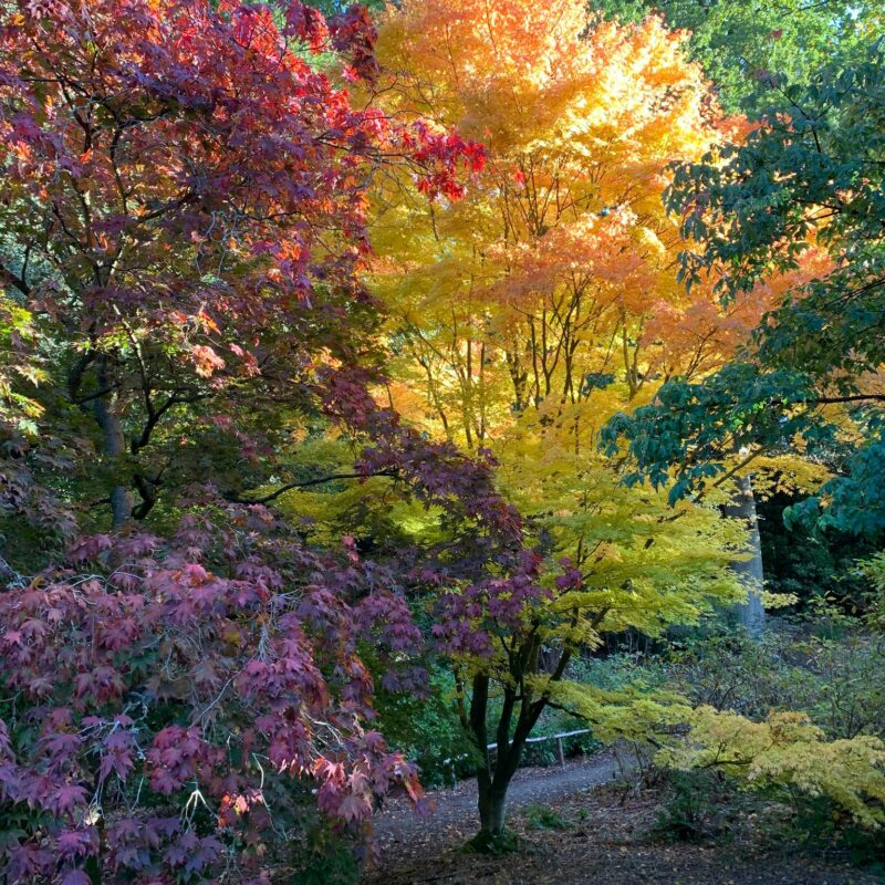 Autumn in the Wood Garden at Riverhill