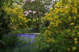 Azaleas Leigh Clapp Riverhill Garden