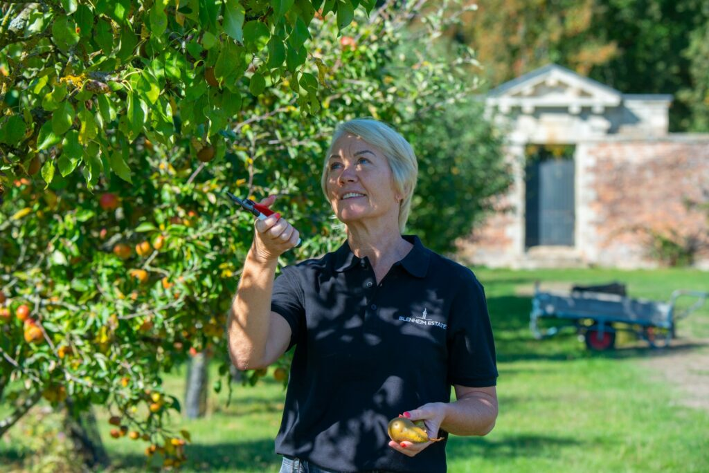 Blenheim Palace gardener in the orchard