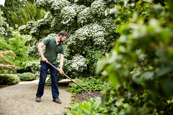 Gardener hoeing Newby Hall Gardens