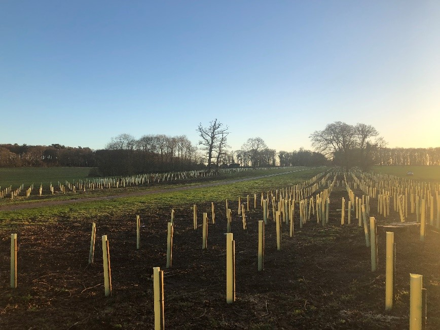 Holkham Hall sustainable planting