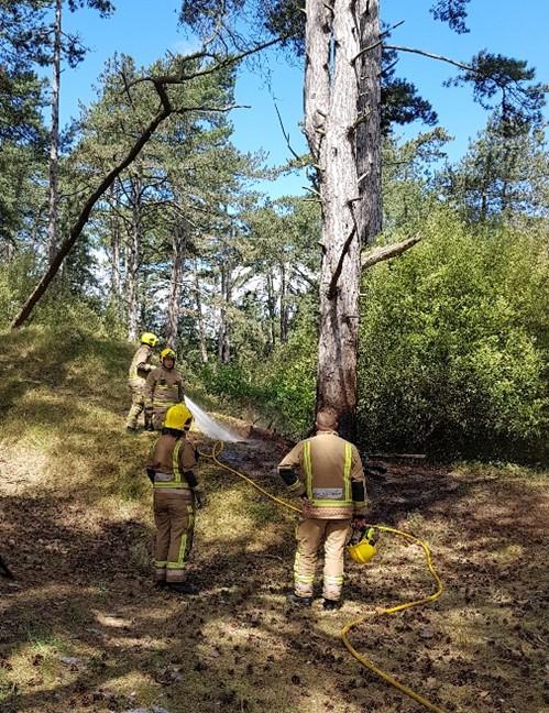 Holkham tree management