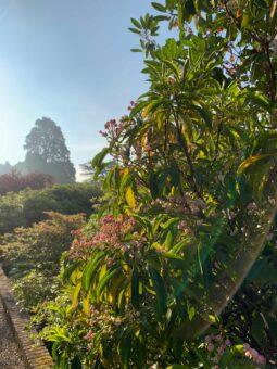 Jungle at Riverhill Garden