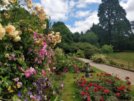 Rose Walk at Riverhill Garden