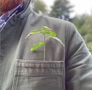 Seedling in pocket Packington