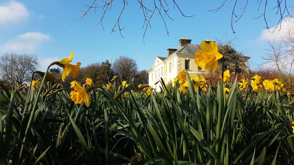 daffodile and Kelly House
