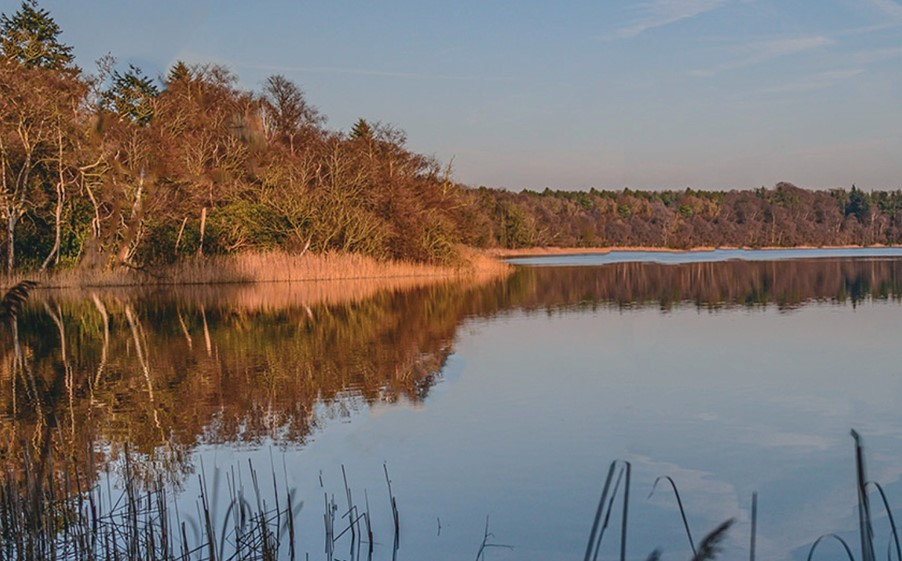 Fritton Lake, the heart of the rewilding project and the site of a new eco-tourism venture
