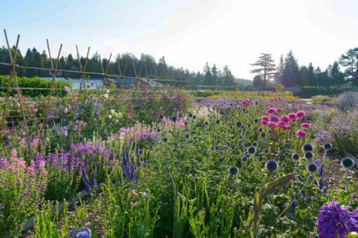 Gordon Castle Walled Garden flower row