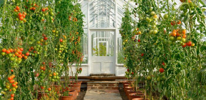 Gordon Castle Walled Garden greenhouse