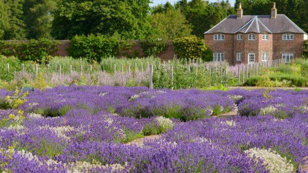 Gordon Castle Walled Garden herb last