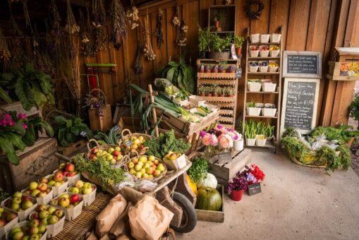 Gordon Castle Walled Garden vegetables