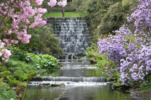 Himalayan Garden cascade credit Trevor Nicholson and Harewood House Trust