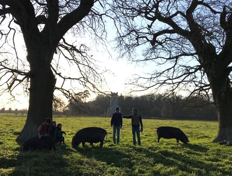 Hugh on site with a pair of Norfolk black pigs