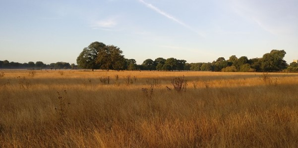 Somerleyton's parkland, gradually returning to nature