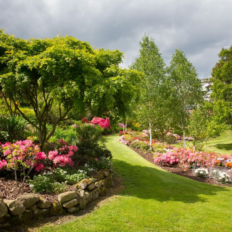 Brynkinalt shrubbery-garden